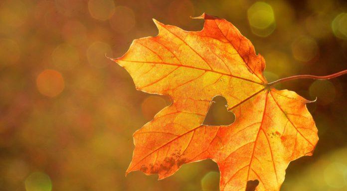 Jeseň plná farieb