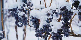 Ľadové víno
