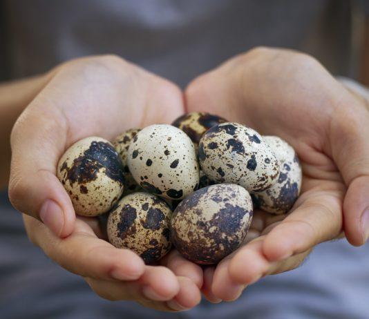 Prepeličie vajcia